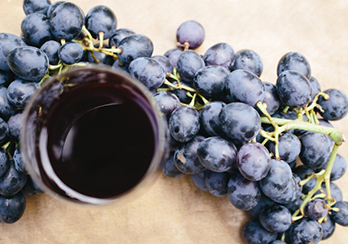 「生きたワイン」の特性